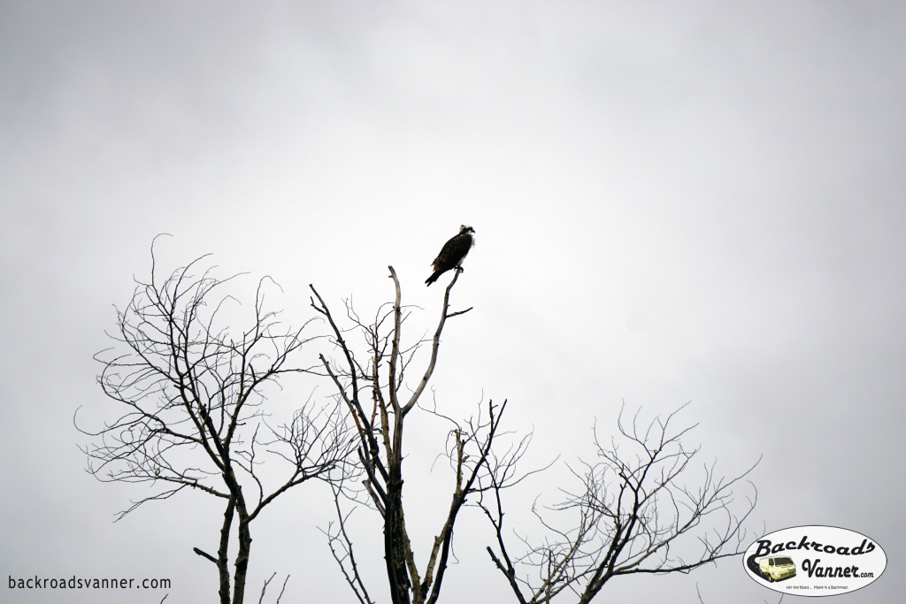 Bird in Grand Teton National Park   Photo By BackroadsVanner.com